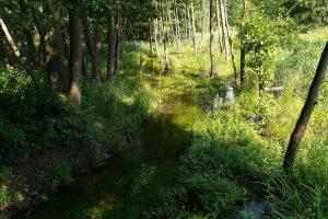 Lesní potůček v malebných klokočských lesích